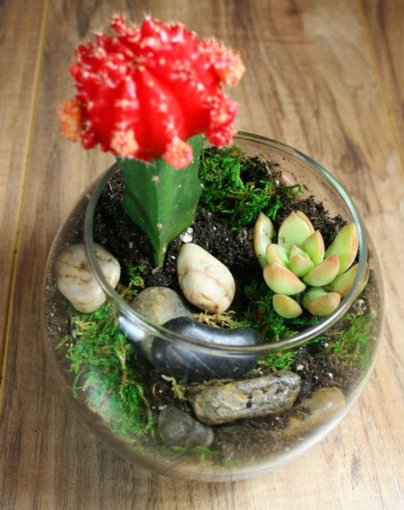 Succulent Terrarium Kit - Complete Glass Bowel Terrarium, Moss, River Rocks, Organic Succulent Soil, activated Charcoal, Pea Gravel.