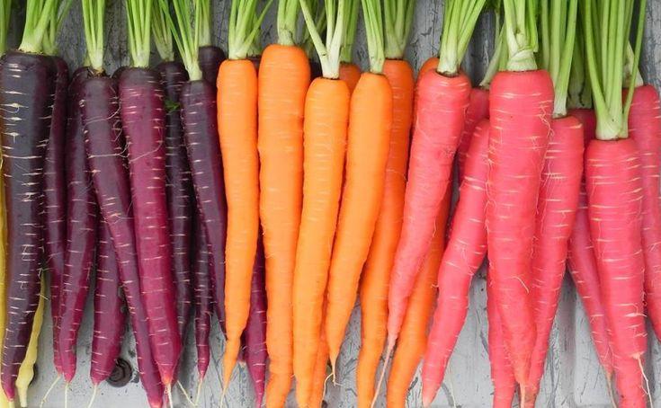 Antiche verdure che non si trovano più….Le carote, secoli fa, erano nere, poi per volere della corona olandese si diffusero quelle arancioni! #sanomangiareit @myfruit