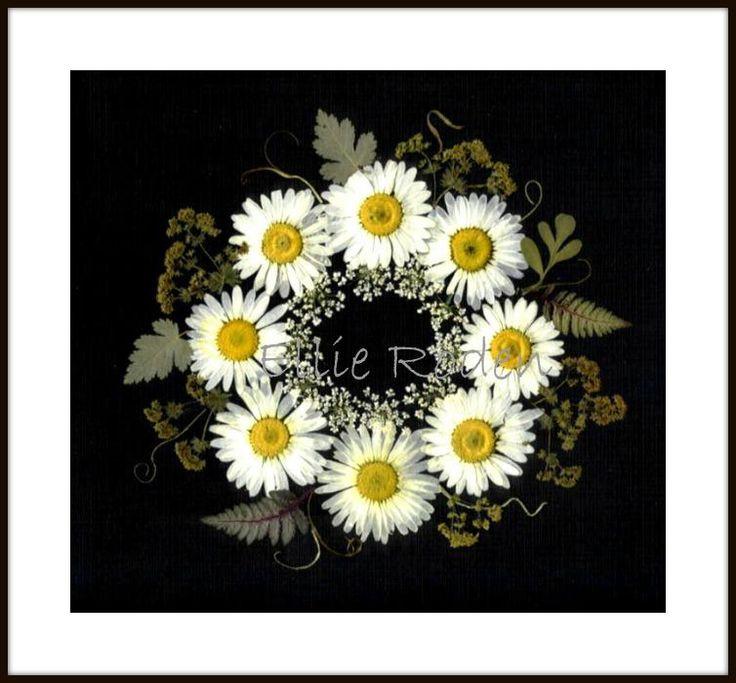 Daisy Wreath    pressed flower art