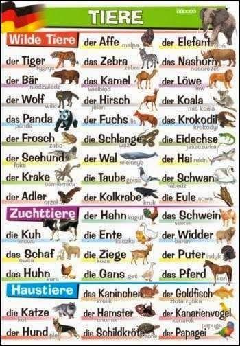 German For Beginners: Die Tiere