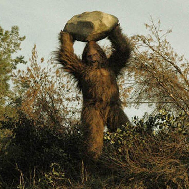 Bigfoot News | Bigfoot Lunch Club: Yahoo Answers: If Bigfoot was ...