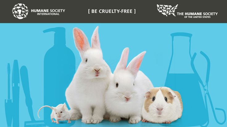 "Learn how to help: Ending Cosmetics Testing on Animals. Buy ONLY products and brands that do NOT test on animals. Make sure they have the ""leaping bunny"" logo and no animals were used for testing on any of the ingredients. Check every label. Humane Society International"
