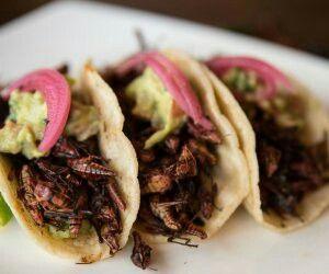 Tacos de Chapulines, Oaxaca
