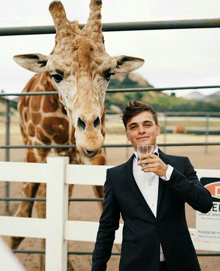 Look at how happy that giraffe is.