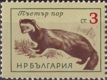 Znaczek: European Polecat (Mustela putorius) (Bułgaria) (Animals) Mi:BG 1379,Sn:BG 1263,Yt:BG 1178