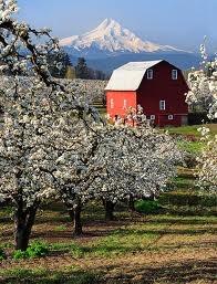 Barn/Orchards: Barns Plans, Red Barns Hoods, Rivers Red, Red Barns Barns, Country Life, House, Barns Beautiful, Barns Hoods Rivers, Photo
