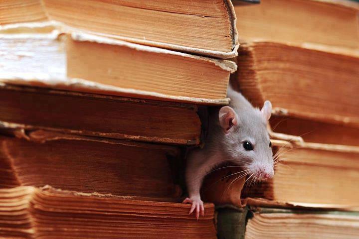 ratón de biblioteca
