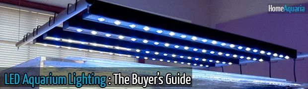 LED Aquarium Lighting: The Buyer's Guide