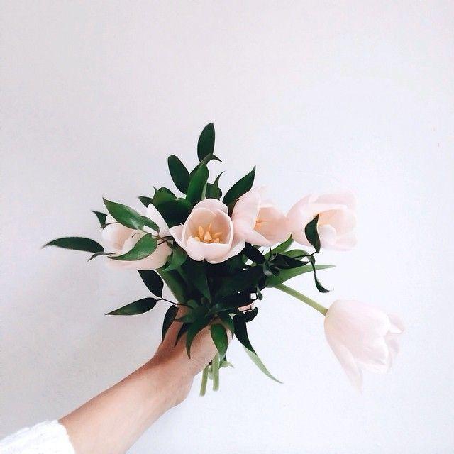 Beautiful tulips/ blooming