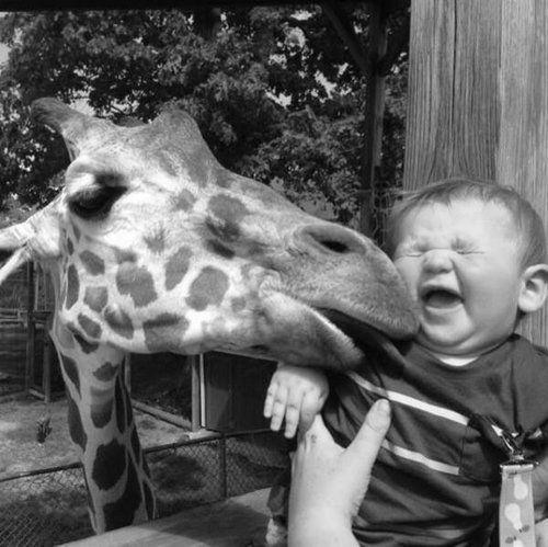 Sheer and utter joy...giraffe kisses.