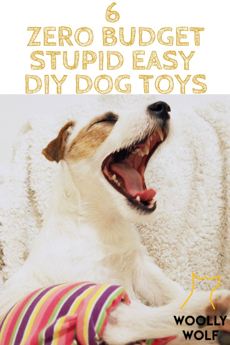 6 Zero Budget Stupid Easy DIY dog toys. Dog training, happy doggo, funny dog.