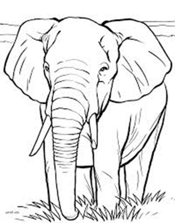 Coloring Pages African Elephant Elephant Coloring Page Elephant Sketch African Elephant
