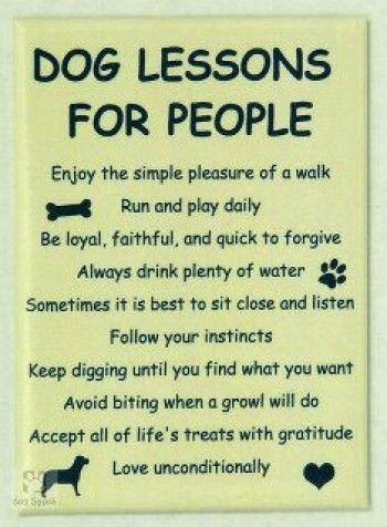 Dog Lessons For People: Doggie, Best Friends, Dogs Lessons, Quote, Pet, Life Lessons, Dogs Lovers, People, Animal