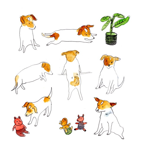 From the beautiful and inspiring illustrations of Camilla Engman's superdog, Morran ...