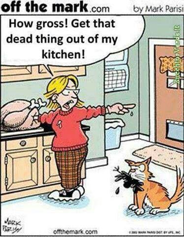 the sad irony... it's everywhere...  #MyVeganJournal Vegan Animals  Chicken cats