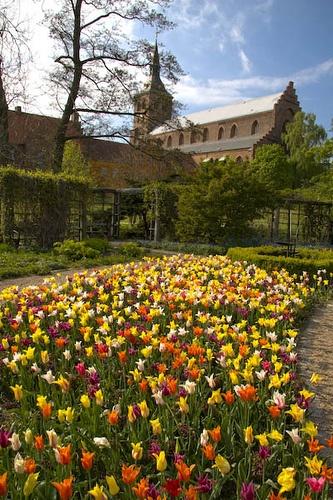 Garden in Odense, DENMARK.
