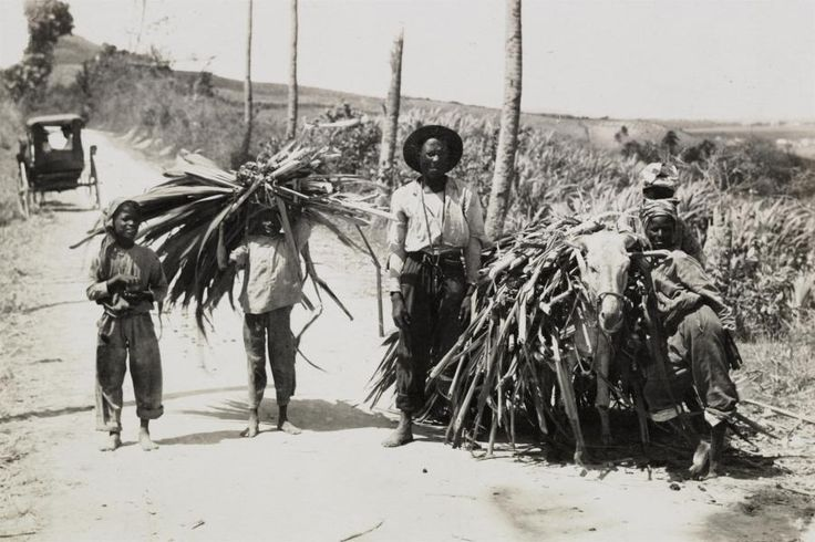 BILLEDER Kom tæt på livet på De Vestindiske Øer for 100 år siden   Danmarkshistorien   DR