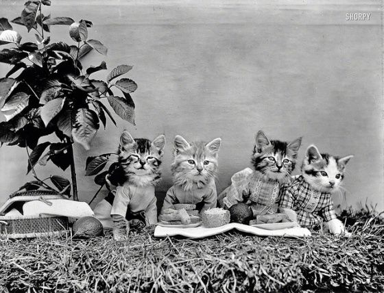 kitties in clothes. Photo by Harry W. Frees – 1914