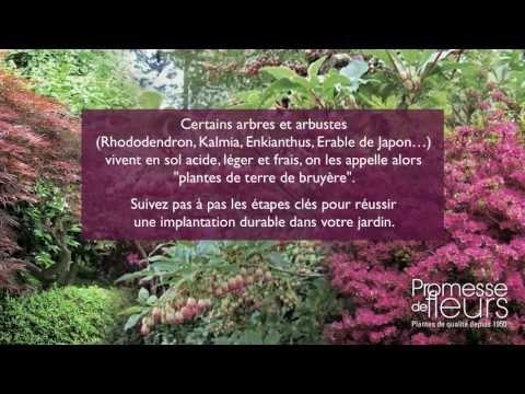 Les 73 Meilleures Images Propos De Jardin Arbustes Arbres Sur Pinterest Jardins Planters