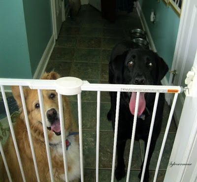 Best 25 Indoor Dog Gates Ideas On Pinterest Indoor