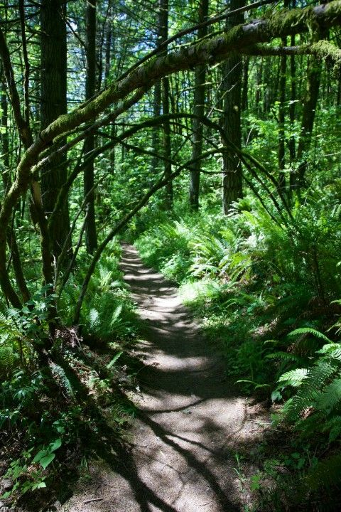 There are plenty of amazing hikes just outside Portland, but what about all the trails within city limits?