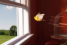 Image result for bird out of  a cage