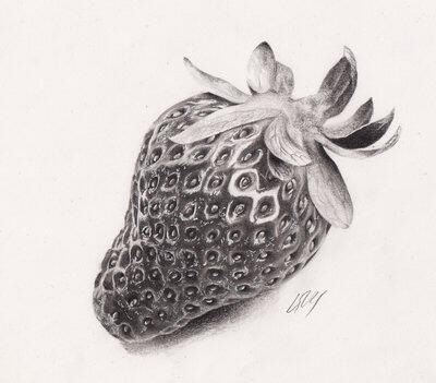 Strawberry pencil drawing