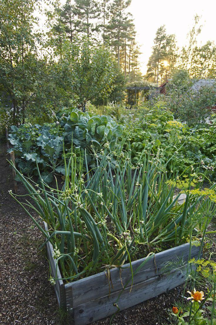 Potager Durable 8 Legumes Perpetuels A Planter Legumes
