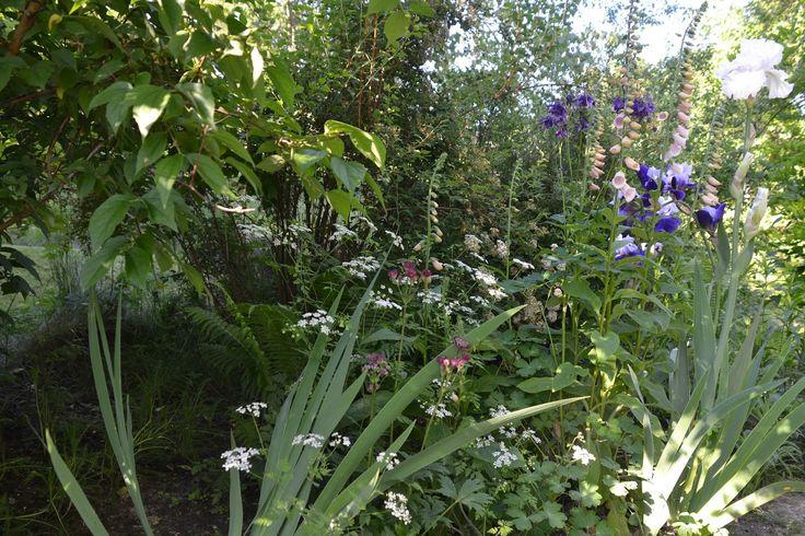 English Garden, ogród angielski copyrights anna skorupska