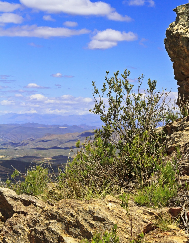 "A ""karoo"" is a dry, desert-like area in South Africa. This photo was taken high in the hills of the Little Karoo in the Western Cape Province."