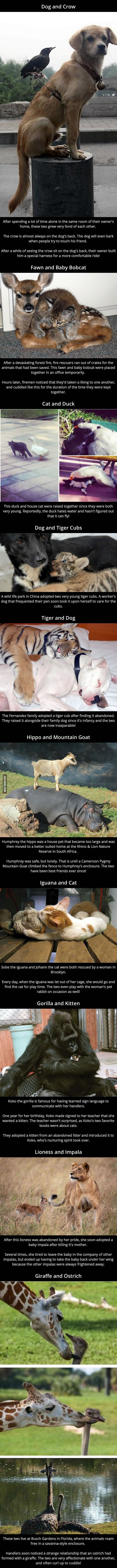 Unusual Animal Friendships - www.viralpx.com