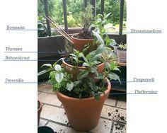 Mein Balkon ist voller Kräuter. Aus sämtlichen Gärten meiner Mutter und meiner Tante (ok - ein paar auch aus dem Baumarkt) habe ich Kräuter ...