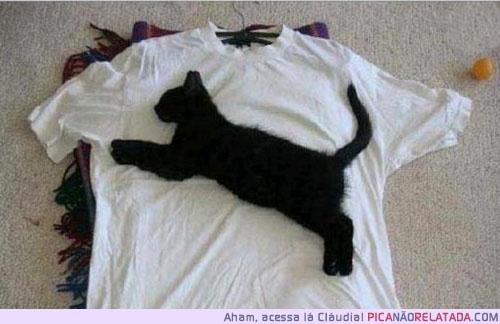 puma: Logo, Cat Shirts, The Real, Funny Cat, Funny Stuff, Funny Animal, Blackcat, Black Cat, Pumas