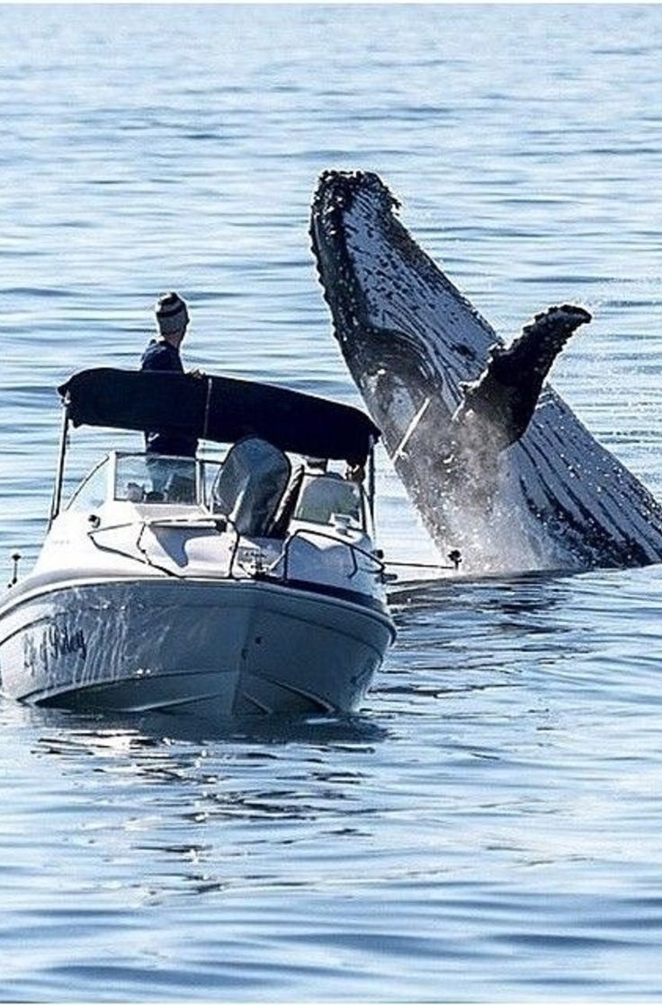 Whale Watching in Far North Queensland, Australia - With Baited Breath From This Fisherman! -Uploaded By ShazB A WONDERFUL THING TO DO IN QLD.