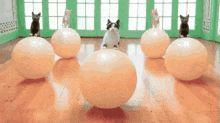 Kitty aerobics
