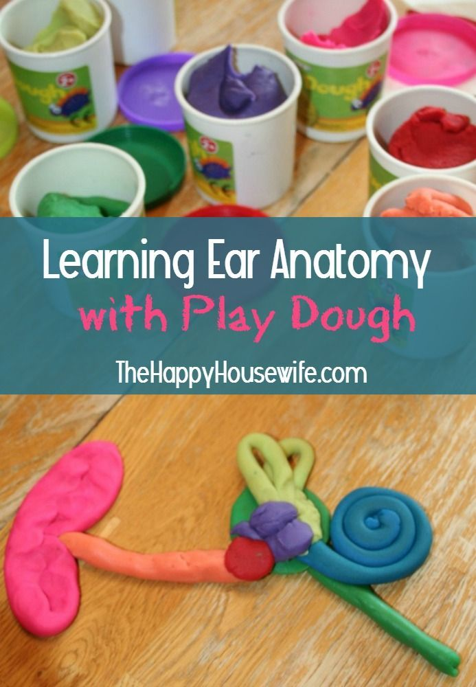 Learning Ear Anatomy with Play Dough at The Happy Housewife. This is a great science activity for younger and older children if you are studying human anatomy.
