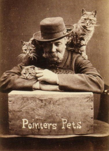 """""""During the 1870s, Harry Pointer became well known for a series of photographs of his pet cats. By 1872, Harry Pointer had created over one hundred different captioned images of cats. The Photographic Newsreported that, by 1884, Pointer had published about two hundred pictures in The Brighton Catsseries."""""""