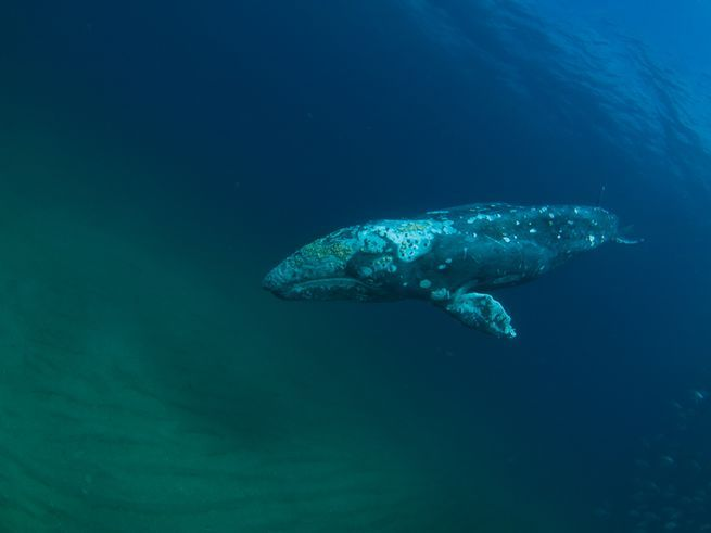 The Best Whale Pictures Ideas On Pinterest Can Not Jonah - Rare moment 40 ton whale jumps completely out of the water