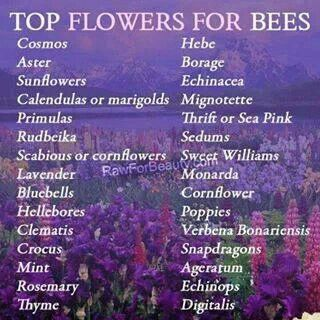 #PinMyDreamBackyard Top flowers for bees