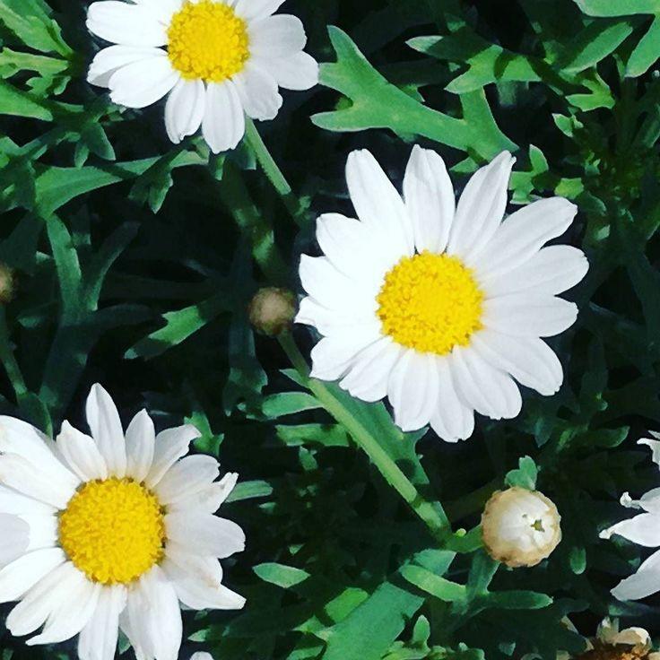 Kwiaty na deszczowy dzień.  #lato #kwiaty #dianapozytywnie