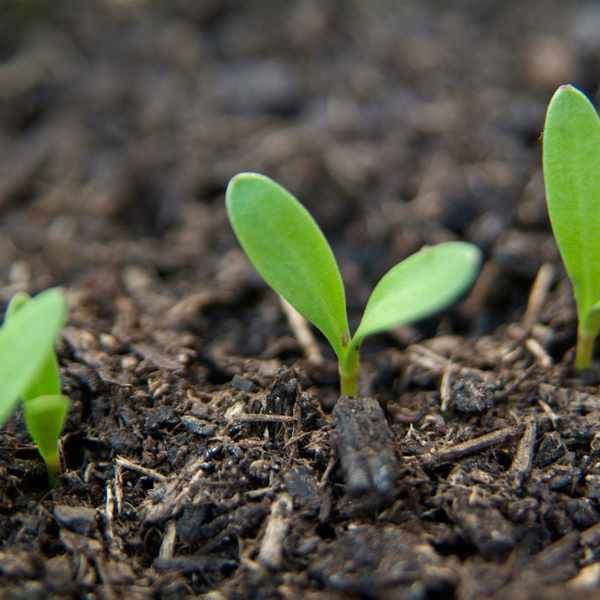 Simple Guide To Sowing Different Types Of Seed Growing