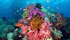 Coral Reef (West Papua, Indonesia)
