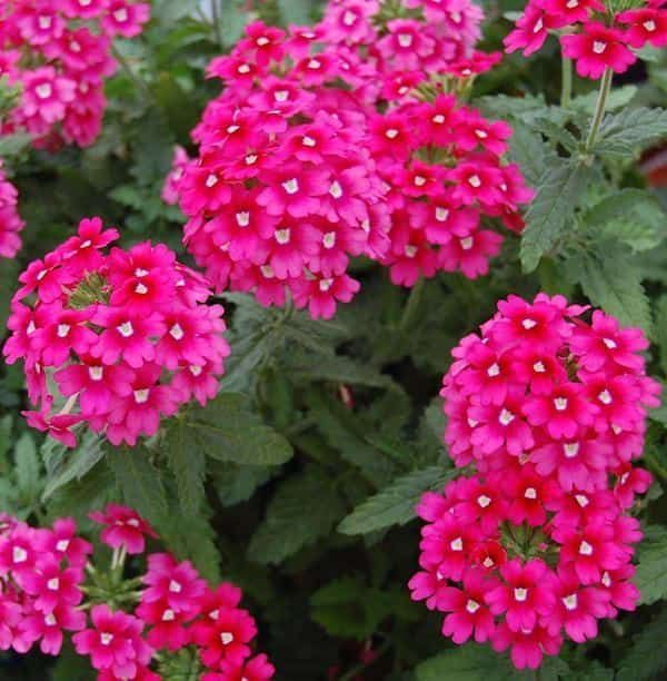 24 Pflanzen Die In Ihrem Garten Ohne Wasser Oder Fast Wachsen Fruhlingspflanzen Pflanzen Durreresistente Pflanzen