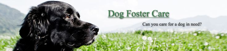 Dog Foster Care www.dogfostercare.org.au