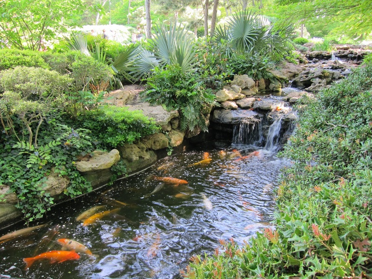 Perfect Botanic Garden, Fort Worth, Texas (Koi Pond At Japanese Garden)