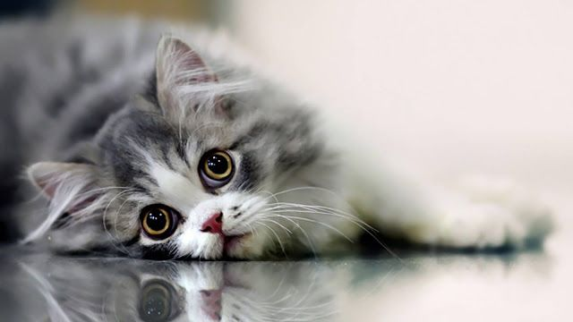 Hd Wallpapers Unique Cute Cat Wallpaper Cute Pinterest Cats