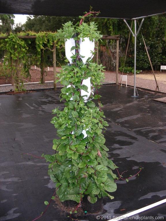 Vertical vegetable garden vertical gardening pinterest for Vertical vegetable garden