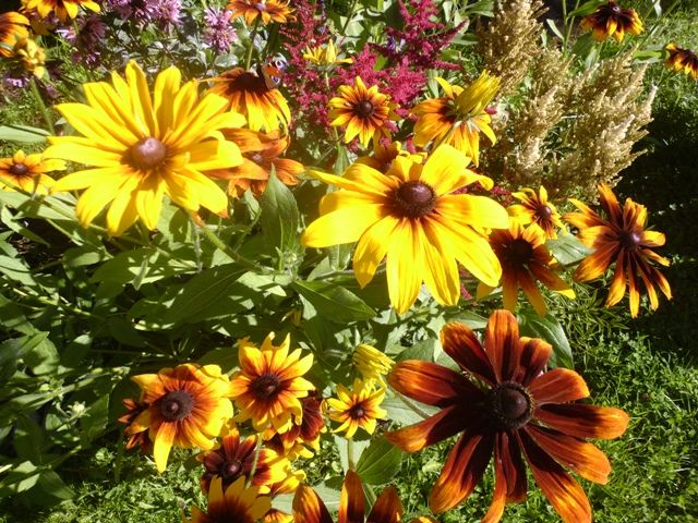 Цветы из моего сада .F 2016.Flowers from my garden