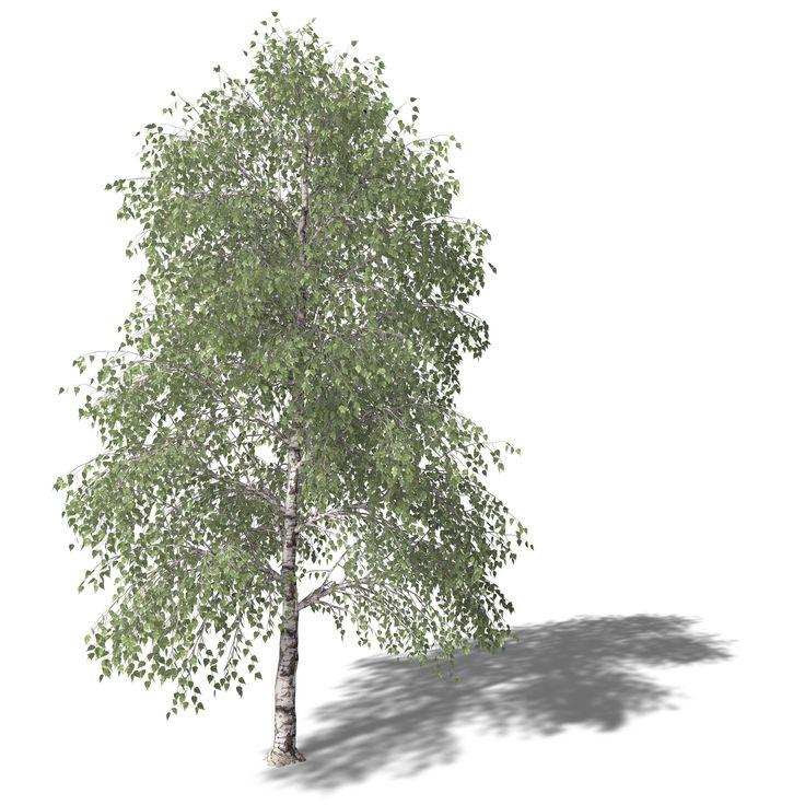 17 Best Ideas About Birch Tree Wallpaper On Pinterest Tree Wallpaper Tree Bedroom And Winter