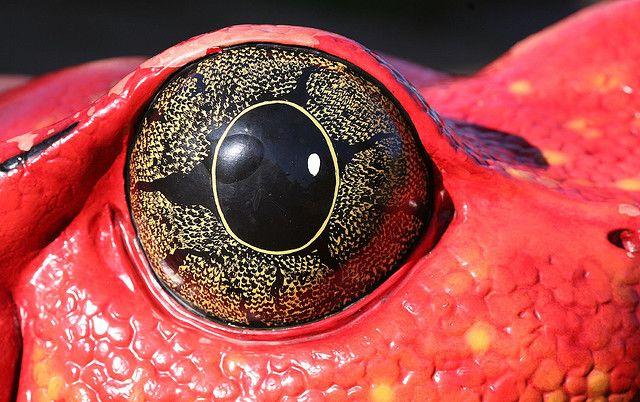 Cool animal eye references
